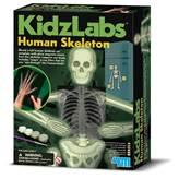 Kreativni set 4M, KidzLabs, Human Skeleton, ljudski kostur